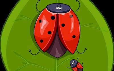 Krabbelkäfer – Wortschatz Körper
